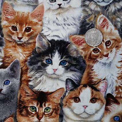 spela med katter